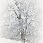 18 - Snow Tree